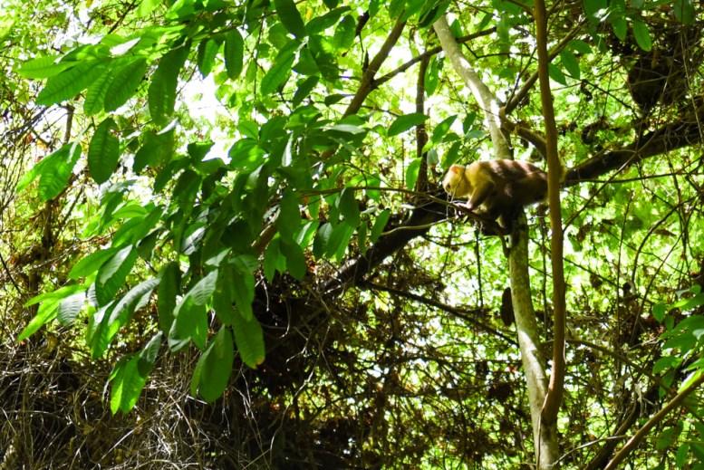 Tayrona Santa Marta Colombia Southamerica_Travel_Kerstin Musl_05