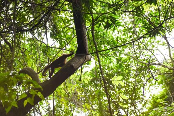Tayrona Santa Marta Colombia Southamerica_Travel_Kerstin Musl_06