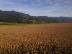 Images for slovenia fields