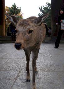 Kansai-Nara-japan-photography-pablo-kersz11