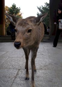 Kansai-Nara-japan-photography-pablo-kersz11