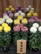Kansai-Nara-japan-photography-pablo-kersz32