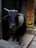 varanasi-india-asia-varanes-street-photography-kersz-78