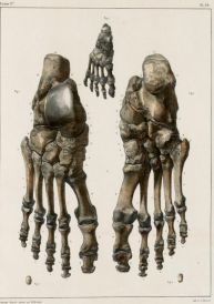 human-body-vintage-scientific-illustration-naturalist-drawing-0005