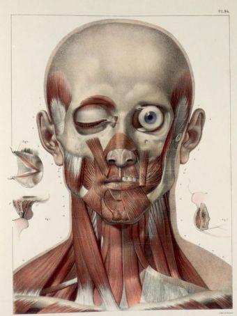 human-body-vintage-scientific-illustration-naturalist-drawing-0011