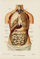 human-body-vintage-scientific-illustration-naturalist-drawing-0013