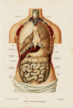 human-body-vintage-scientific-illustration-naturalist-drawing-0013