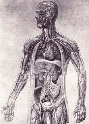 human-body-vintage-scientific-illustration-naturalist-drawing-0014