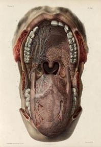 human-body-vintage-scientific-illustration-naturalist-drawing-0016