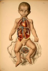human-body-vintage-scientific-illustration-naturalist-drawing-0020