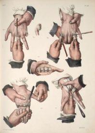 human-body-vintage-scientific-illustration-naturalist-drawing-0028