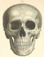 human-body-vintage-scientific-illustration-naturalist-drawing-0035