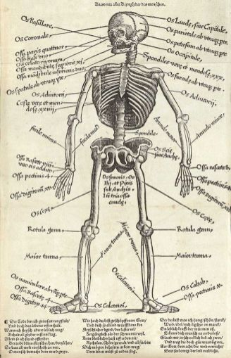 human-body-vintage-scientific-illustration-naturalist-drawing-0043
