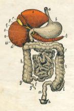 human-body-vintage-scientific-illustration-naturalist-drawing-0044