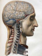 human-body-vintage-scientific-illustration-naturalist-drawing-0045