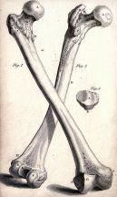 human-body-vintage-scientific-illustration-naturalist-drawing-0048