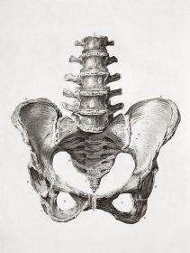 human-body-vintage-scientific-illustration-naturalist-drawing-0051