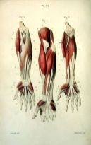 human-body-vintage-scientific-illustration-naturalist-drawing-0059