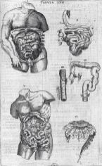 human-body-vintage-scientific-illustration-naturalist-drawing-0066