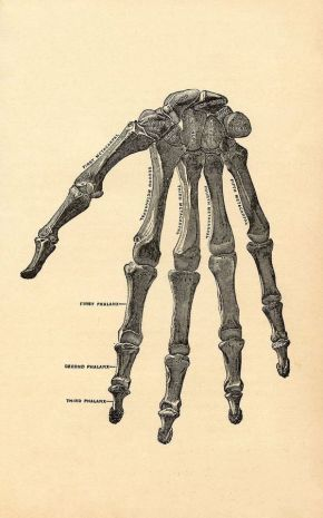human-body-vintage-scientific-illustration-naturalist-drawing-0067