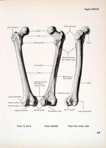 human-body-vintage-scientific-illustration-naturalist-drawing-0071