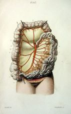 human-body-vintage-scientific-illustration-naturalist-drawing-0073