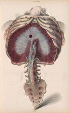human-body-vintage-scientific-illustration-naturalist-drawing-0074