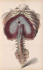 human-body-vintage-scientific-illustration-naturalist-drawing-0074