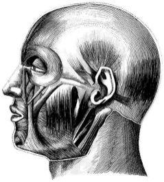 human-body-vintage-scientific-illustration-naturalist-drawing-0075