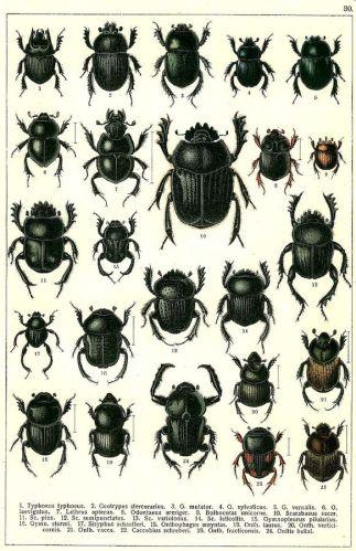 scientific-illustration-naturalist-drawing-0003