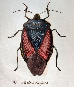 scientific-illustration-naturalist-drawing-0008