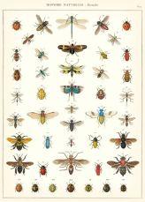 scientific-illustration-naturalist-drawing-0018