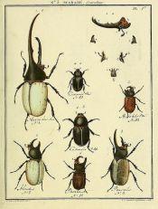 scientific-illustration-naturalist-drawing-0027