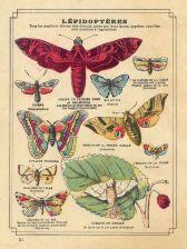 scientific-illustration-naturalist-drawing-0028