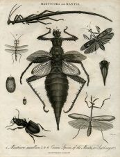 Old Scientific Illustrations