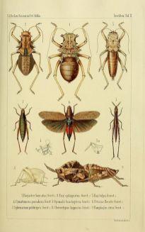 scientific-illustration-naturalist-drawing-0047