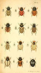 scientific-illustration-naturalist-drawing-0048