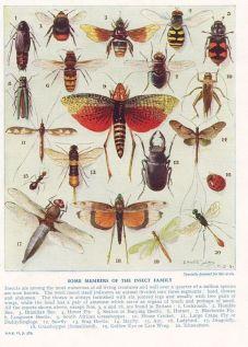 scientific-illustration-naturalist-drawing-0049