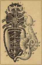 scientific-illustration-naturalist-drawing-0056