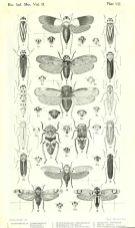 scientific-illustration-naturalist-drawing-0057