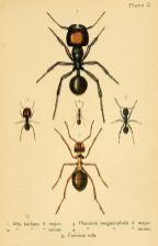 scientific-illustration-naturalist-drawing-0059