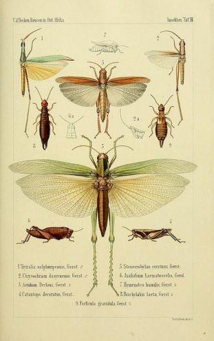 scientific-illustration-naturalist-drawing-0061