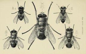 scientific-illustration-naturalist-drawing-0063