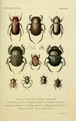 scientific-illustration-naturalist-drawing-0065