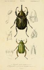 scientific-illustration-naturalist-drawing-0066
