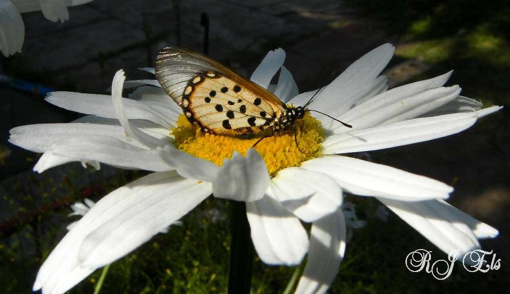 Photography and Essential Tremors Butterfly