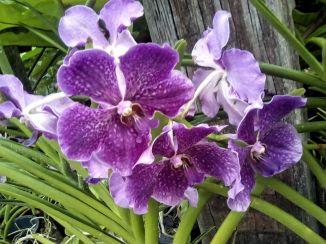 jardin orchidee visite kuala lumpur nature malaisie
