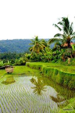 rice-terrace-bali