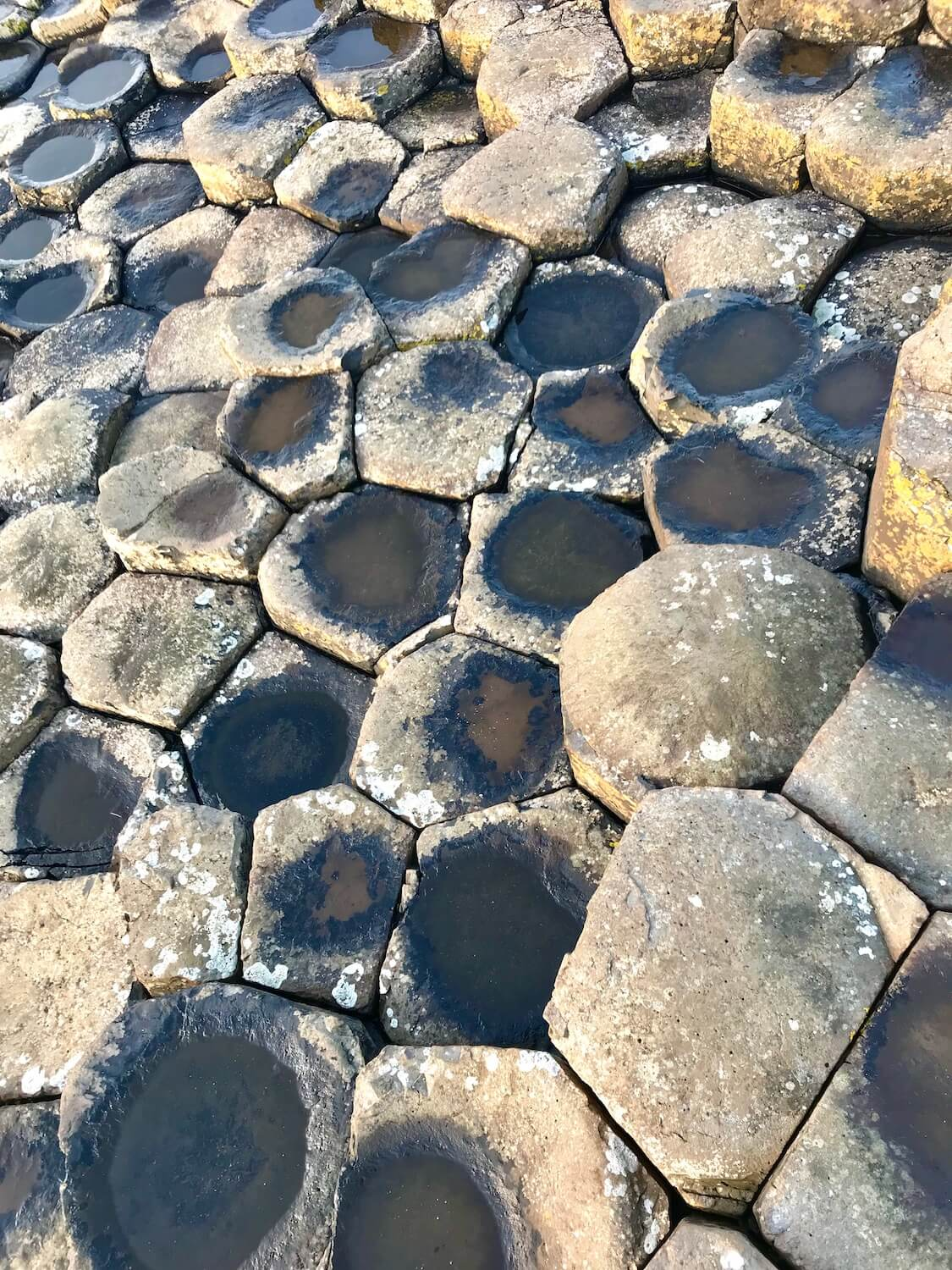 The Giant's Causeway is an area of about 40,000 interlocking basalt columns which are shown in this photo. This view shows the top of the rocks which have a pentagon shaped. Some of them have residual water from the waves splashing.