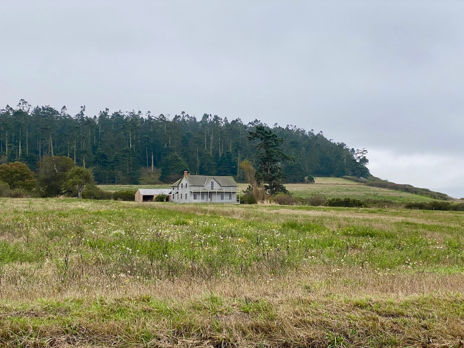 A lone home sits on a large piece of land covered with grass crops that lead to a forest in the background. The sky is gray.